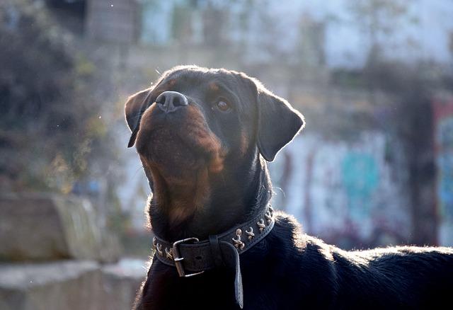 niebezpieczne rasy psów